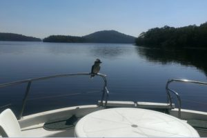 Kookaburra on the bow rail